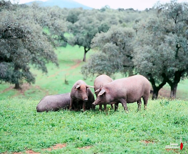 Jamón ibérico de bellota de cerdo iberico