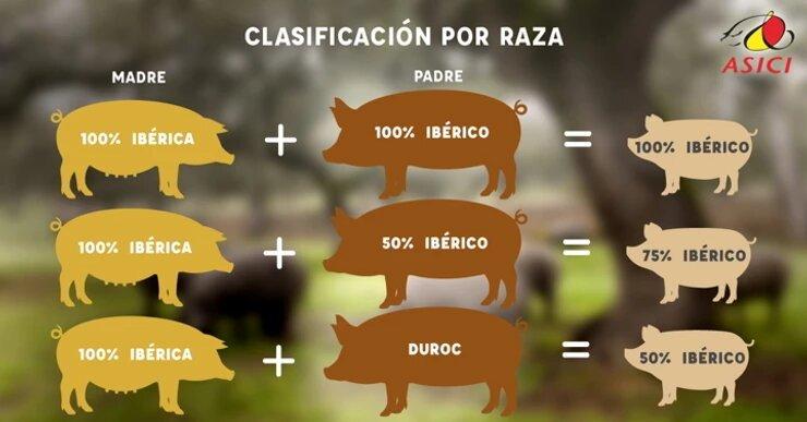 tabla de criterios por los que se clasifica el Jamón Ibérico
